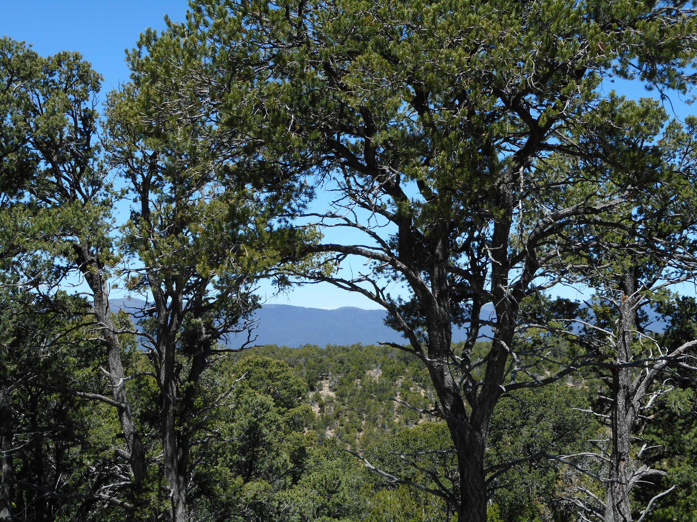 215 Via Sedillo Road, Tijeras NM 87059