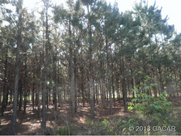 00 Vacant Lot, High Springs FL 32643