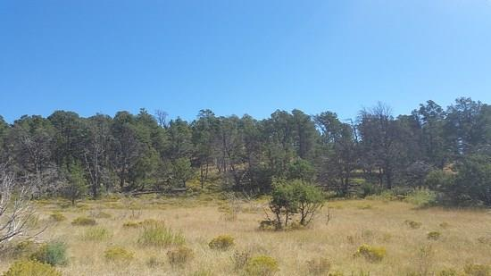 #1 Pinon Ridge Road, Ruidoso Downs NM 88346