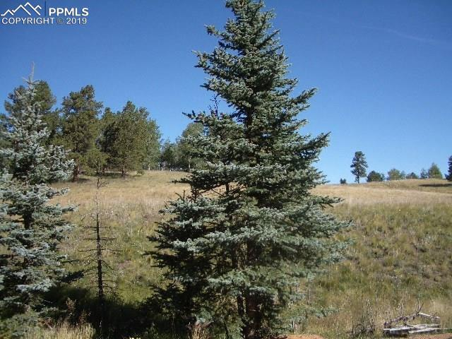 307 Pinaceae Heights, Divide CO 80814